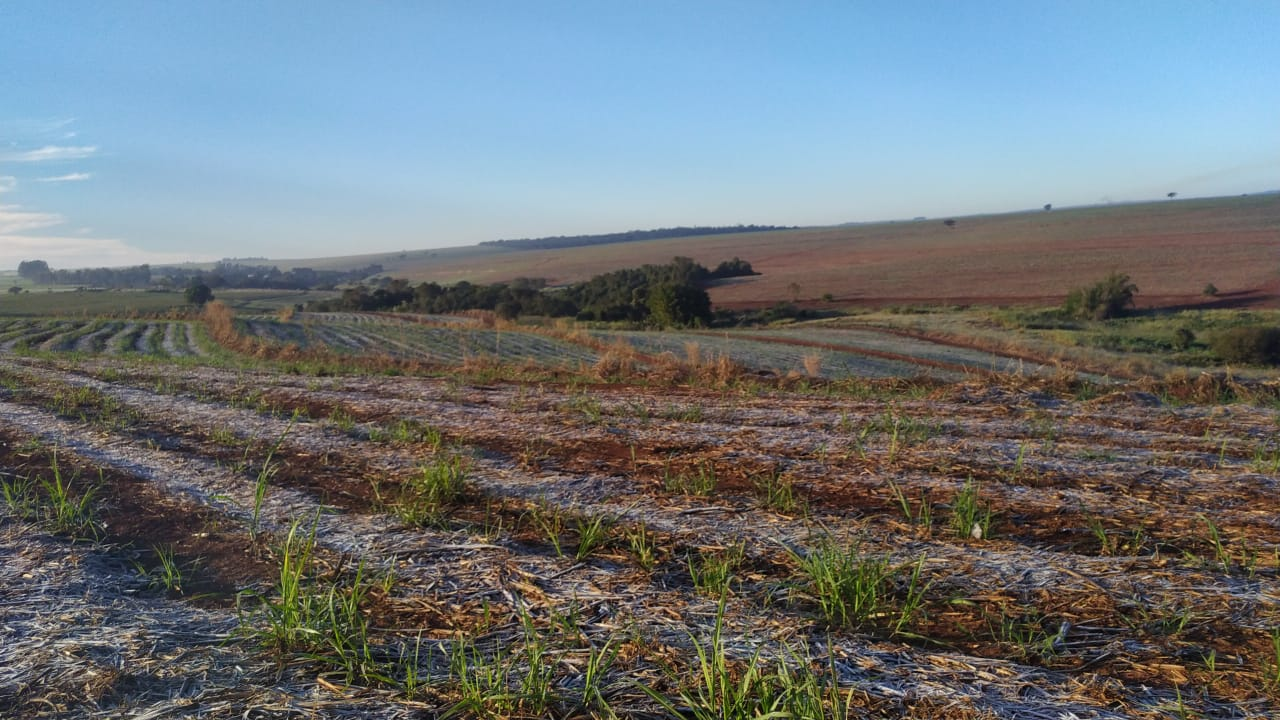 Frost covering a sugarcane field