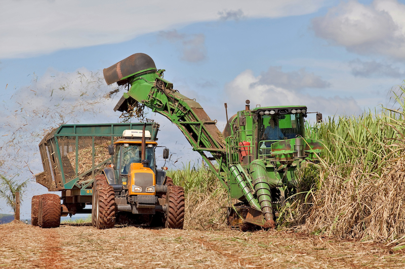 Harvesting operation in a sugarcane field