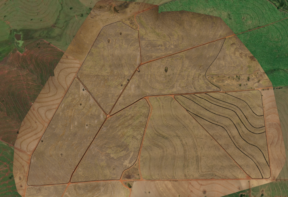 Drone orthomosaic of a sugarcane field