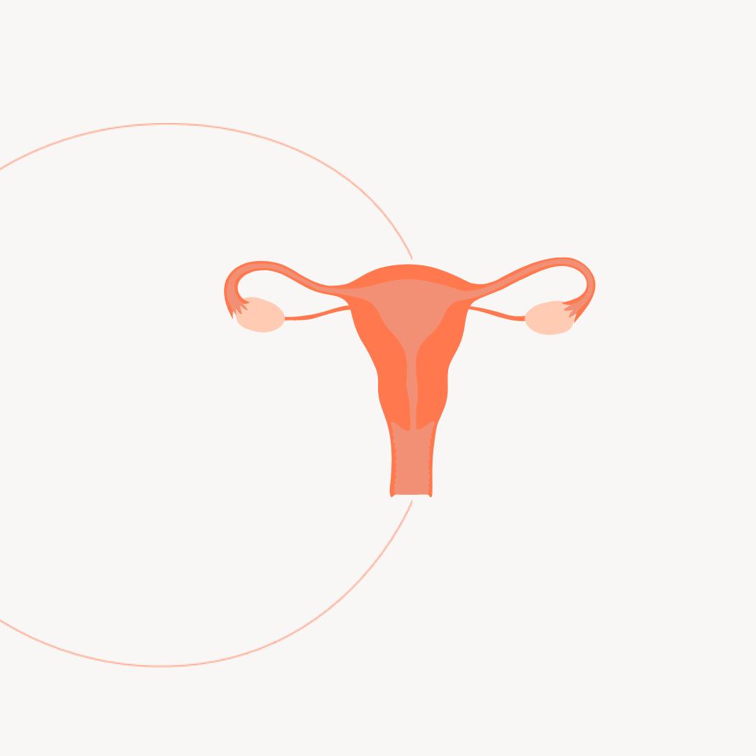 Was ist Endometriose? Über Symptome, Behandlung und Fruchtbarkeit.