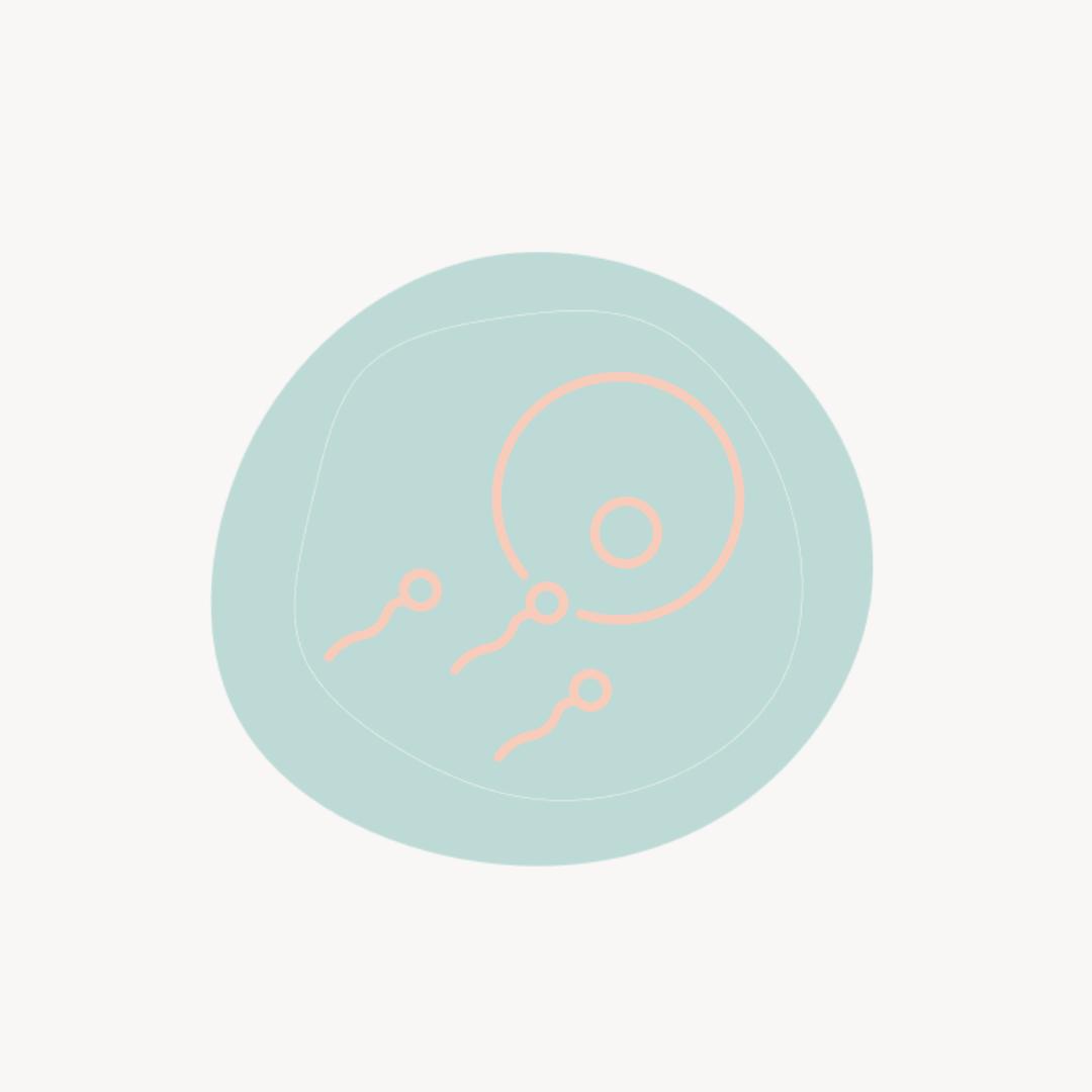 Schwangerschaft: Wie funktioniert die Befruchtung der Eizelle?