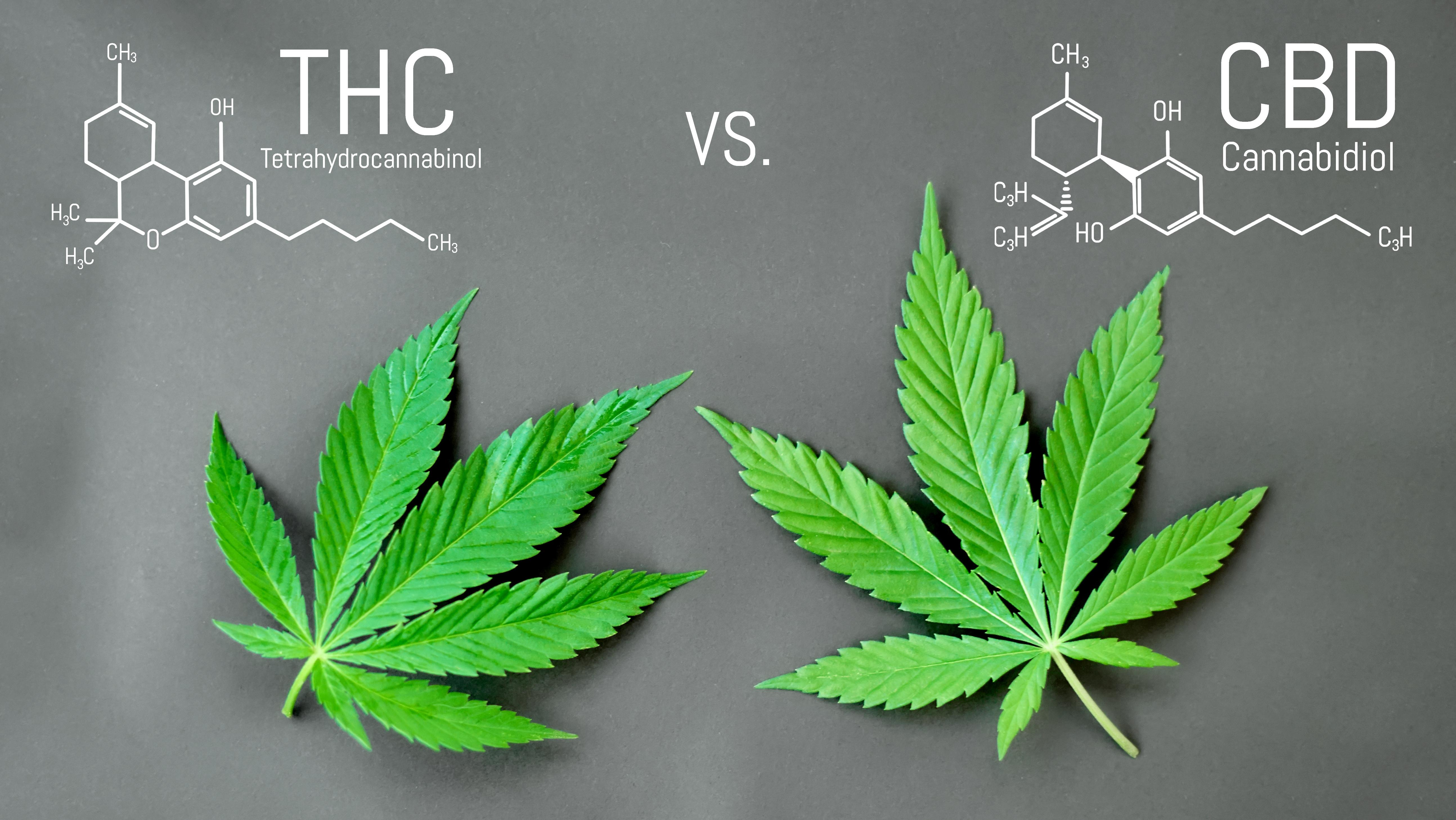 Marijuana SEO organic growth strategies for cannabis business