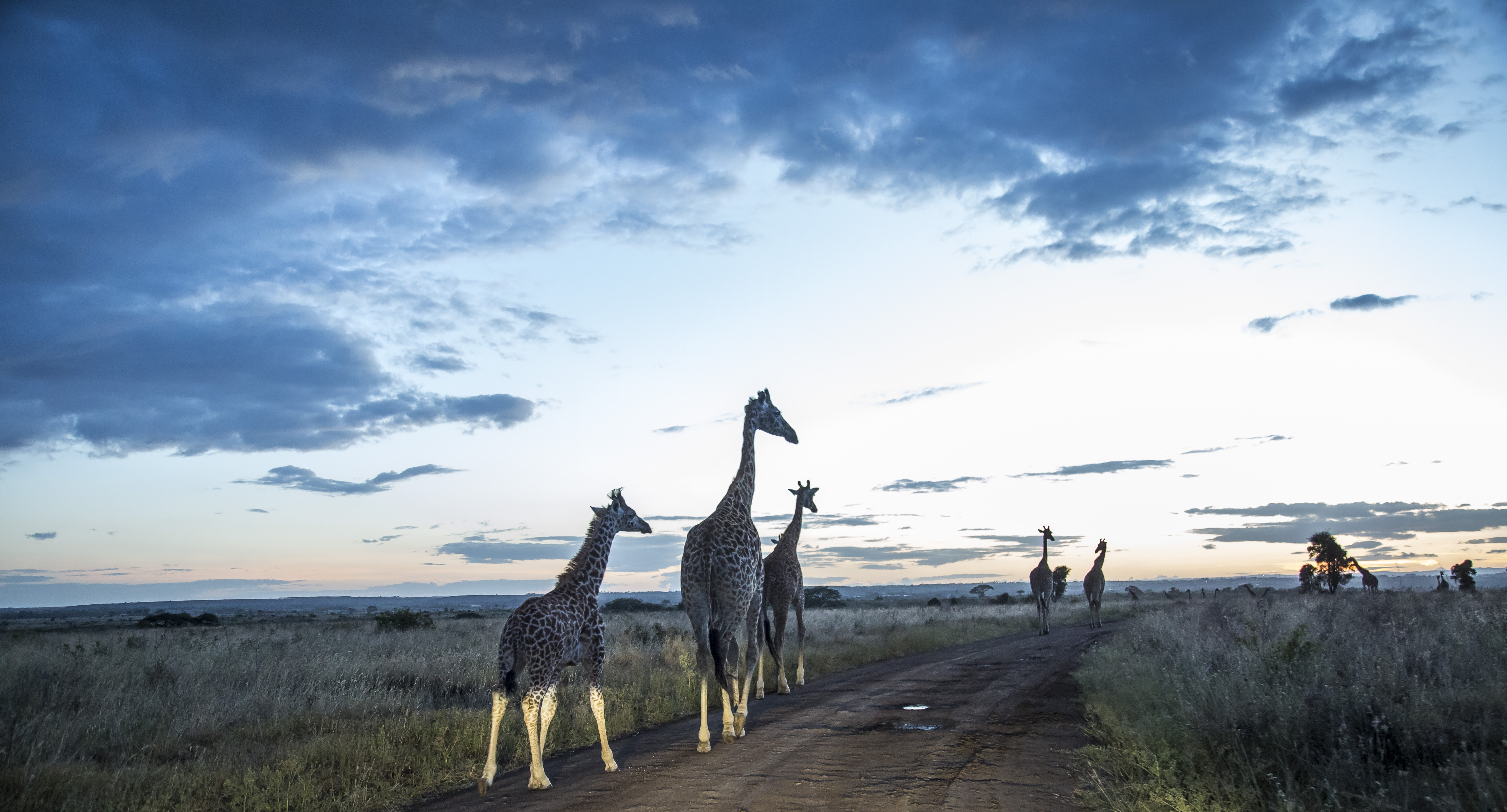 Escape to Nairobi National Park on a Day trip with only 710 Bonga Points