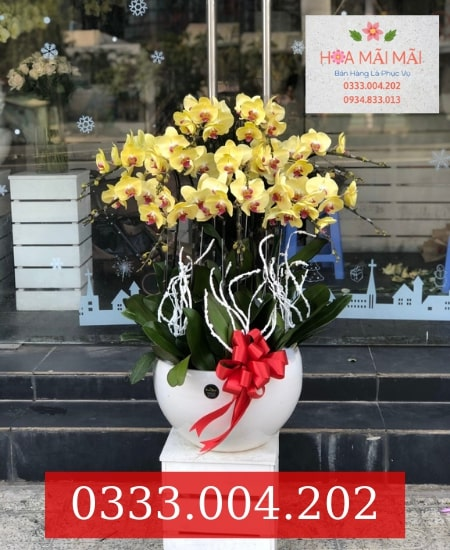 Tiệm hoa lan hồ điệp Đà Nẵng
