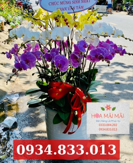 Mua hoa lan hồ điệp uy tín tại Đà Nẵng