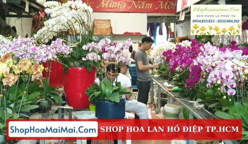 Cửa hàng hoa lan hồ điệp TPHCM