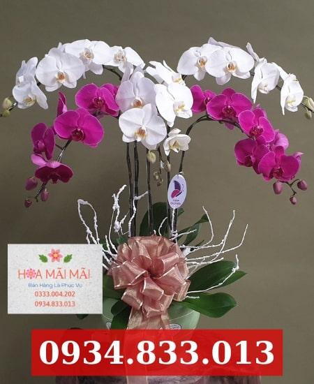 Tiệm hoa lan hồ điệp TPHCM