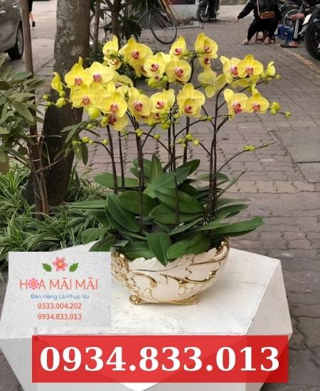 Cửa hàng hoa lan hồ điệp TP.HCM