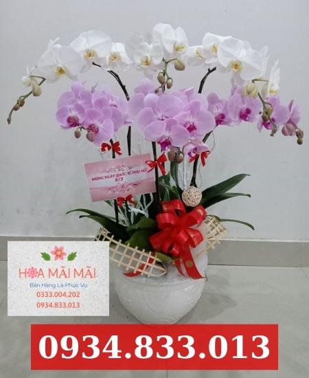 Showroom trưng bày hoa lan hồ điệp TP.HCM