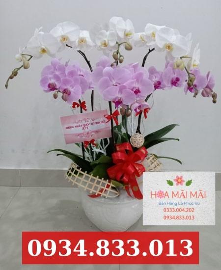 Cửa hàng hoa lan hồ điệp Hải Châu Đà Nẵng