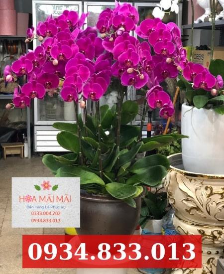 Shop hoa lan hồ điệp Ninh Thuận