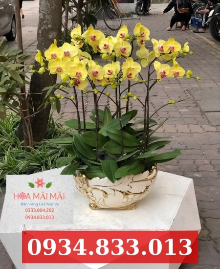 Shop hoa lan hồ điệp quận Sơn Trà
