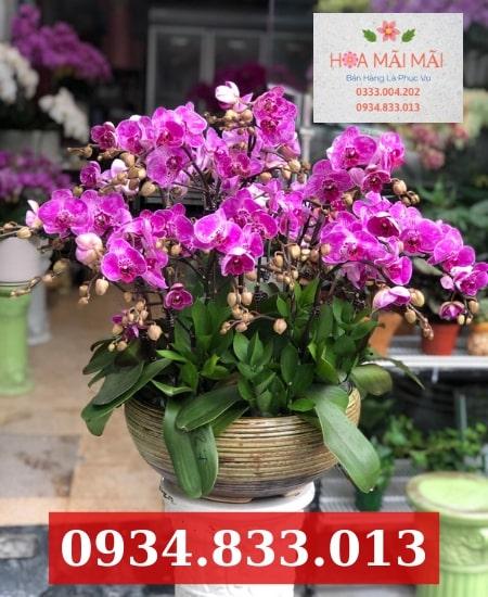 Cửa hàng hoa lan hồ điệp tại Khánh Hòa