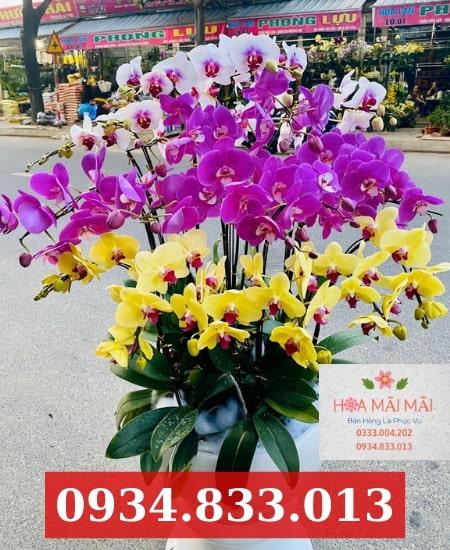 Giao hoa lan hồ điệp tận nơi Khánh Hòa