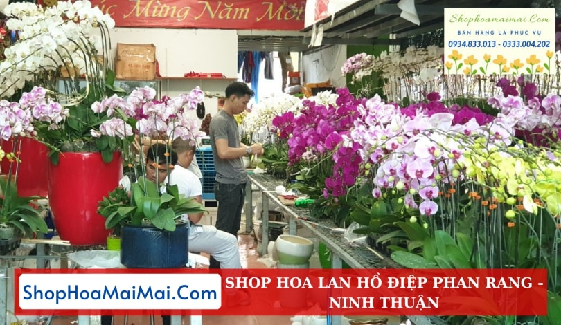 Cửa Hàng Hoa Lan Hồ Điệp Phan Rang