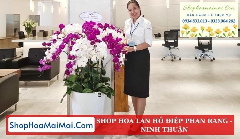 Giao Hoa Lan Hồ Điệp Tận Nơi Ninh Thuận