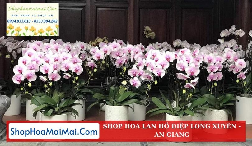 Shop Hoa Lan Hồ Điệp An Giang