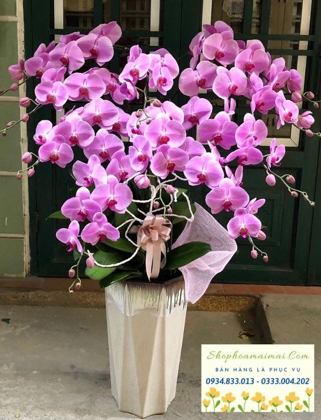 """Nằm trong bộ tứ tùng - cúc - trúc - lan, lan hồ điệp với đặc điểm cấu trúc hoàn hảo cùng vẻ đẹp kiêu sa, phong phú hình dáng và màu sắc đã mang lại giá trị tinh thần cao trong đời sống xã hội từ trước đến nay. Hoa lan hồ điệp có cánh mọc đối xứng, đường gân nổi trên từng cánh hoa đều đặn, đặc biệt, dáng hoa tròn trịa tượng trưng cho sự hoàn hảo, vững chắc. Đây là loài hoa mang lại phong thủy tích cực, được sử dụng trong kinh doanh, buôn bán... nhằm thu hút tài lộc, mang lại may mắn cho gia chủ. Hoa lan hồ điệp còn được sử dụng với tinh thần """"cầu được ước thấy"""" trong văn hóa xã hội của người Việt nói riêng và châu Á nói chung. Chậu lan hồ điệp được đặt trong nhà mang lại vượng khí tốt, giúp gia đình êm ấm, sung túc. Ngoài ra, lan hồ điệp với đa dạng màu sắc khác nhau tượng trưng cho một thông điệp ở những khía cạnh khác nhau trong đời sống. Với những tác dụng tích cực, hoa lan hồ điệp được chọn làm món quà mang giá trị tinh thần lớn và được đón nhận nhiệt thành trong các dịp như: hoa lan hồ điệp mừng khai trương, hoa lan hồ điệp mừng thọ, hoa lan hồ điệp mừng tân gia, hoa lan hồ điệp chúc mừng lễ kỷ niệm, hoa lan hồ điệp chia buồn..."""