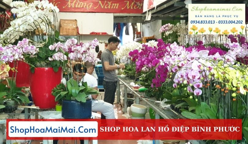 Cửa Hàng Hoa Lan Hồ Điệp Tại Bình Phước