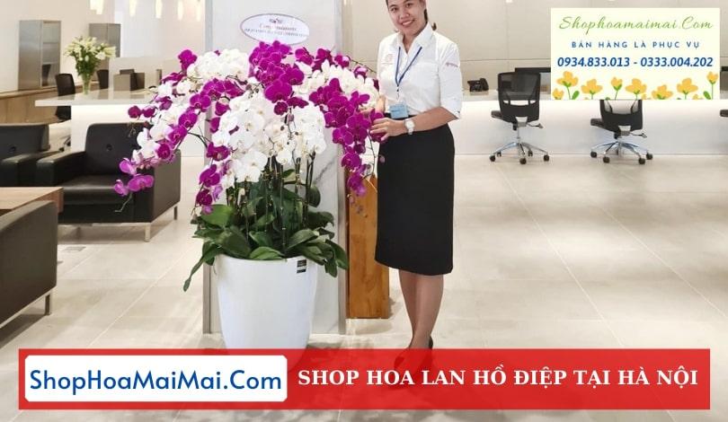 Cửa Hàng Lan Hồ Điệp Tại Hà Nội