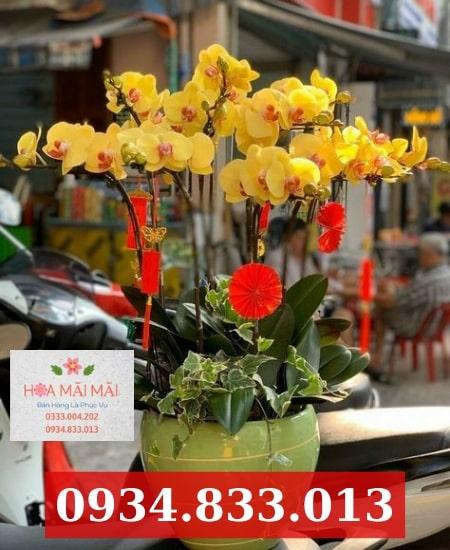 Shop Hoa Lan Hồ Điệp Tại Bến Tre