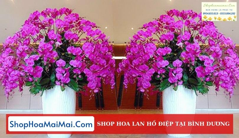 Showroom Hoa Lan Hồ Điệp Bình Dương