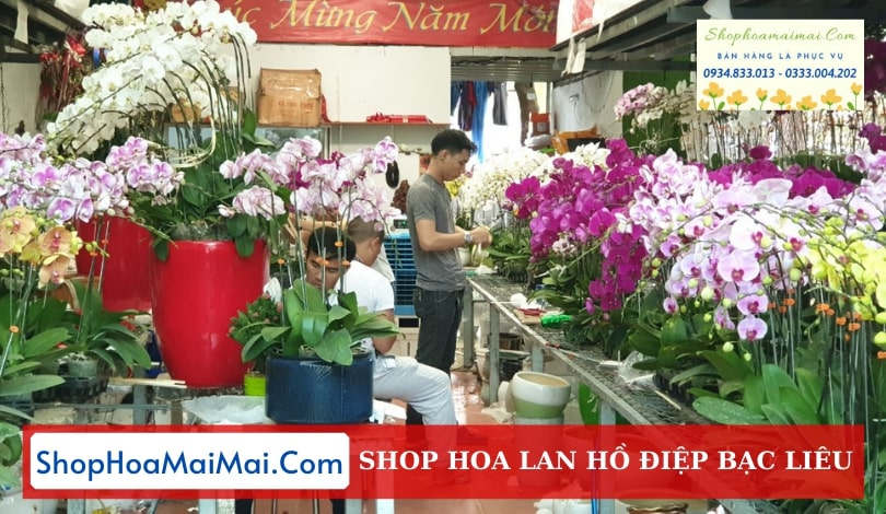 Cửa Hàng Hoa Lan Hồ Điệp Bạc Liêu