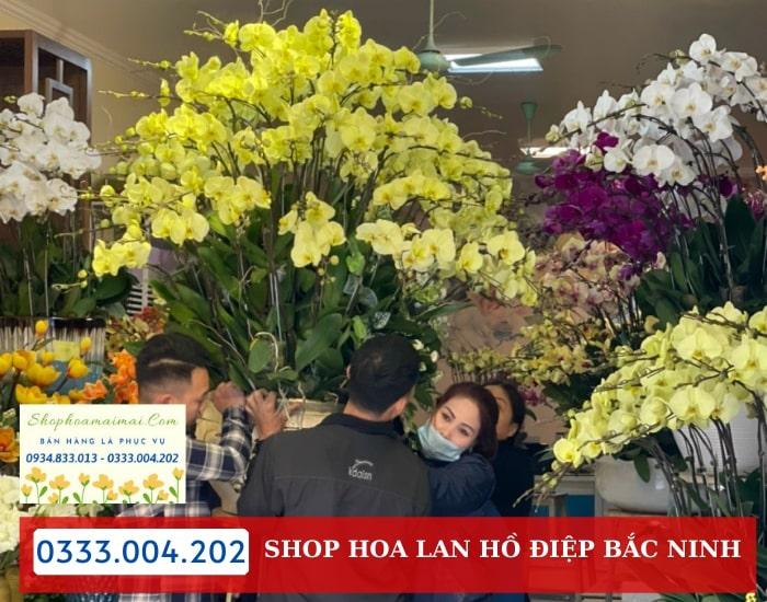 Cửa Hàng Hoa Lan Hồ Điệp Bắc Ninh