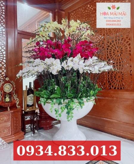 Showroom Hoa Lan Hồ Điệp Bắc Ninh