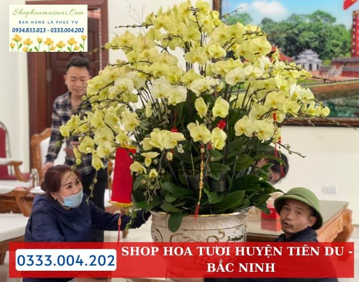 Mua Hoa Lan Hồ Điệp Giá Vườn Huyện Tiên Du