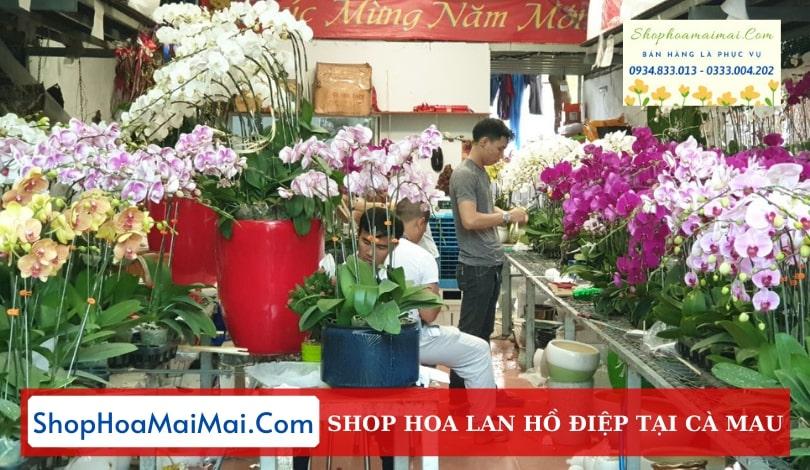 Shop Hoa Lan Hồ Điệp Tại Cà Mau