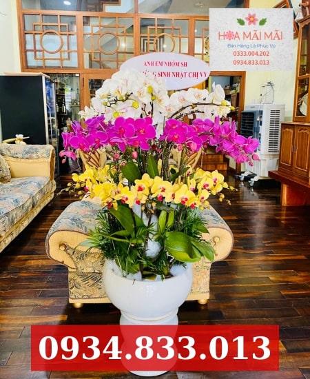 Shop Hoa Lan Hồ Điệp Đắk Lắk