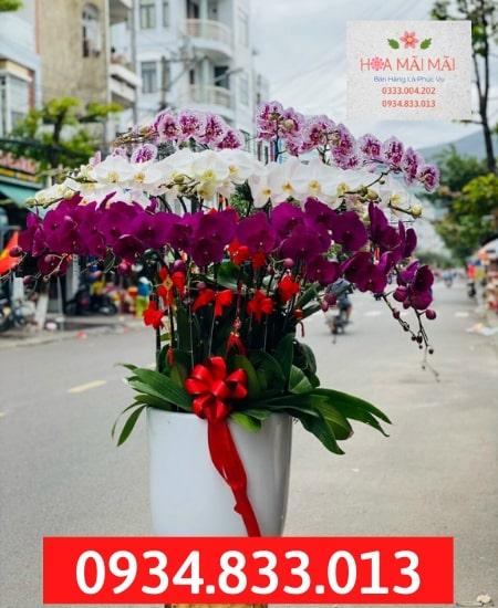 Mua Chậu Lan Hồ Điệp Giá Vườn Tại Hà Giang
