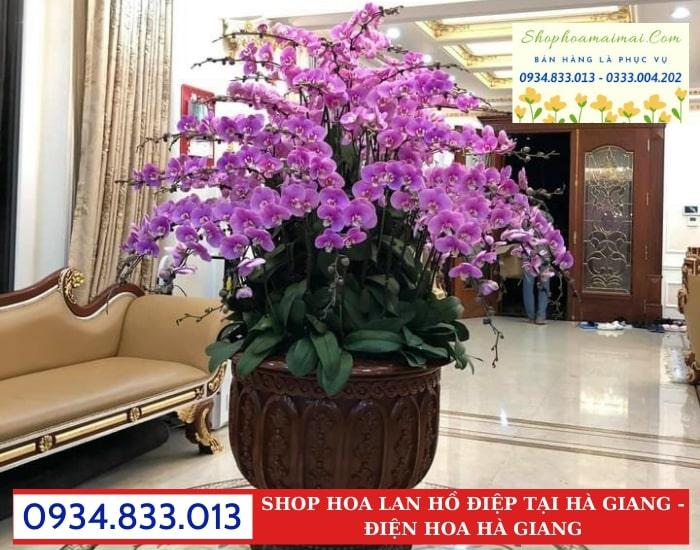 Vườn Hoa Lan Hồ Điệp Tại Hà Giang