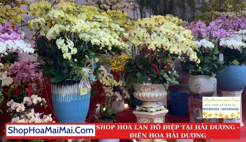 Shop Hoa Lan Hồ Điệp Tại Hải Dương