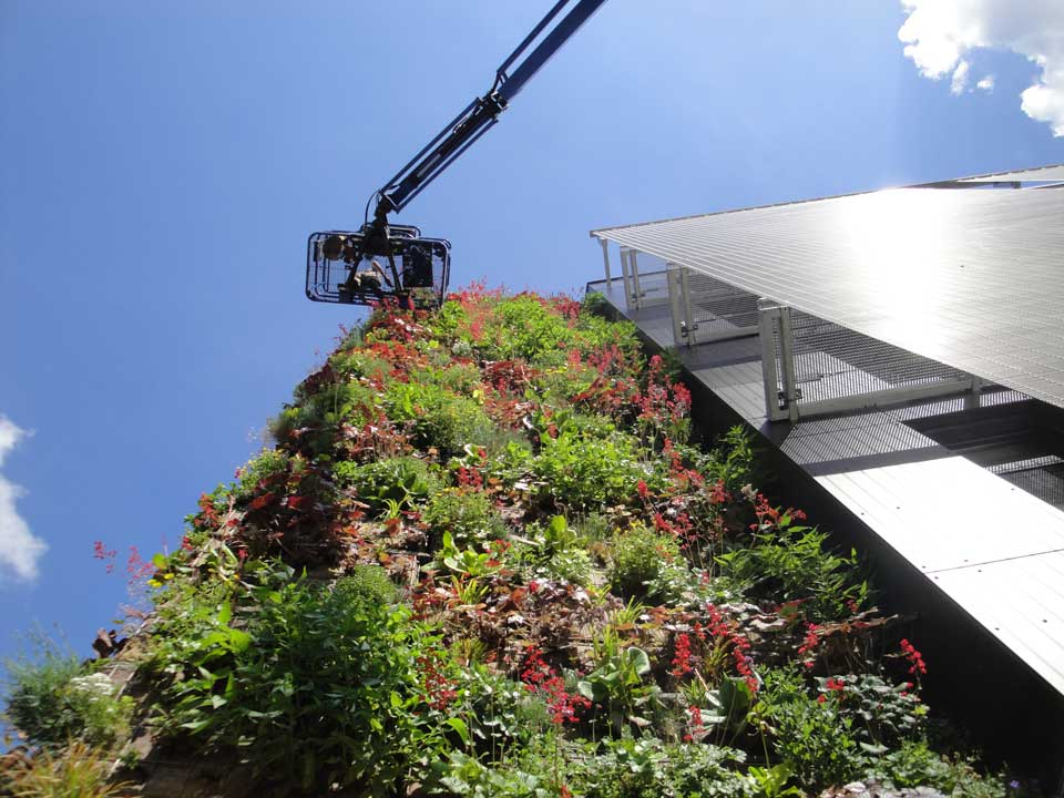 Installation d'un mur végétalisé