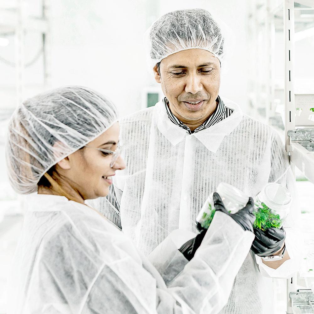 Segra scientists examine tissue culture specimens