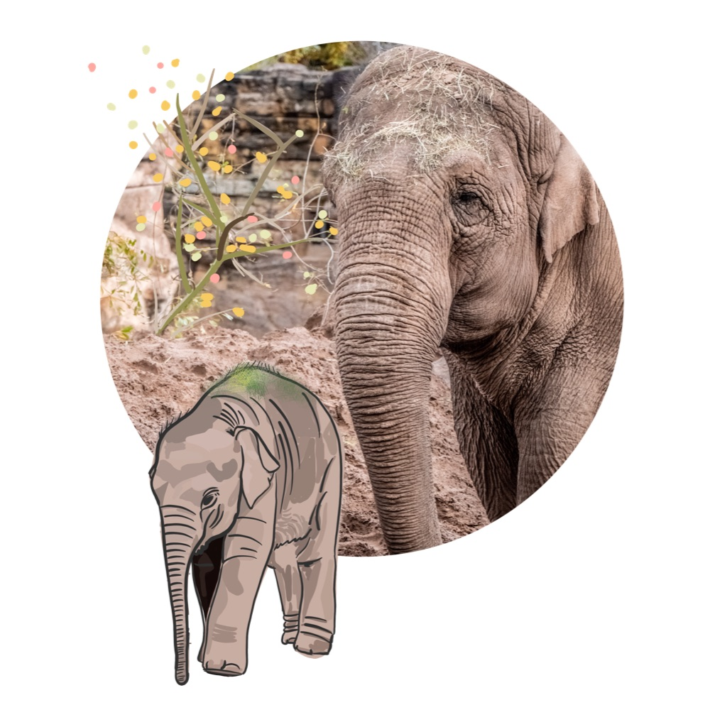 Ubud Zoo and the Elephant  Safari