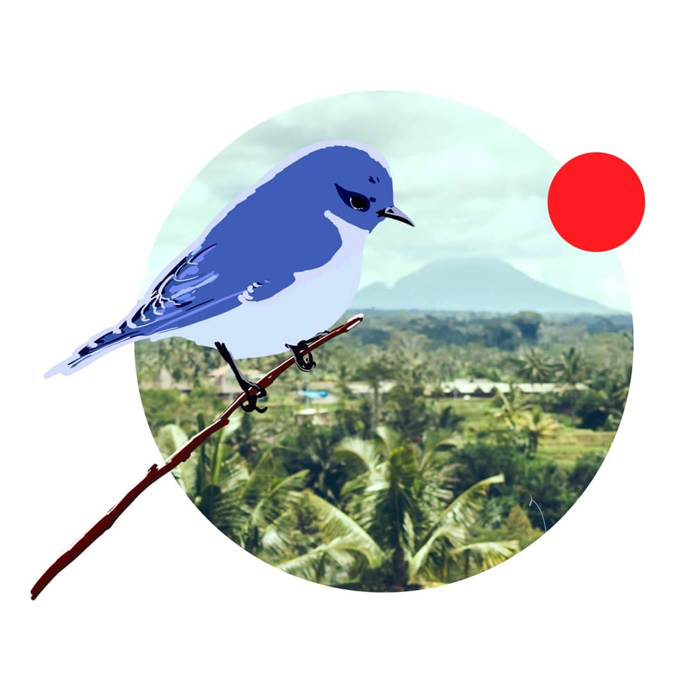 Where to catch a Bluebird Bali Taxi and what it cost