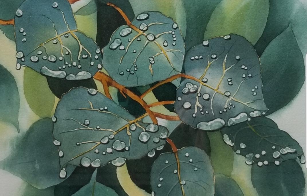 Rain Fresh