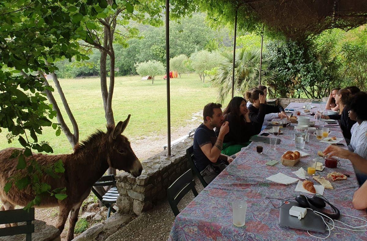 Photo d'un âne qui se demande de quoi l'équipe parle à la table du petit-déjeuner.