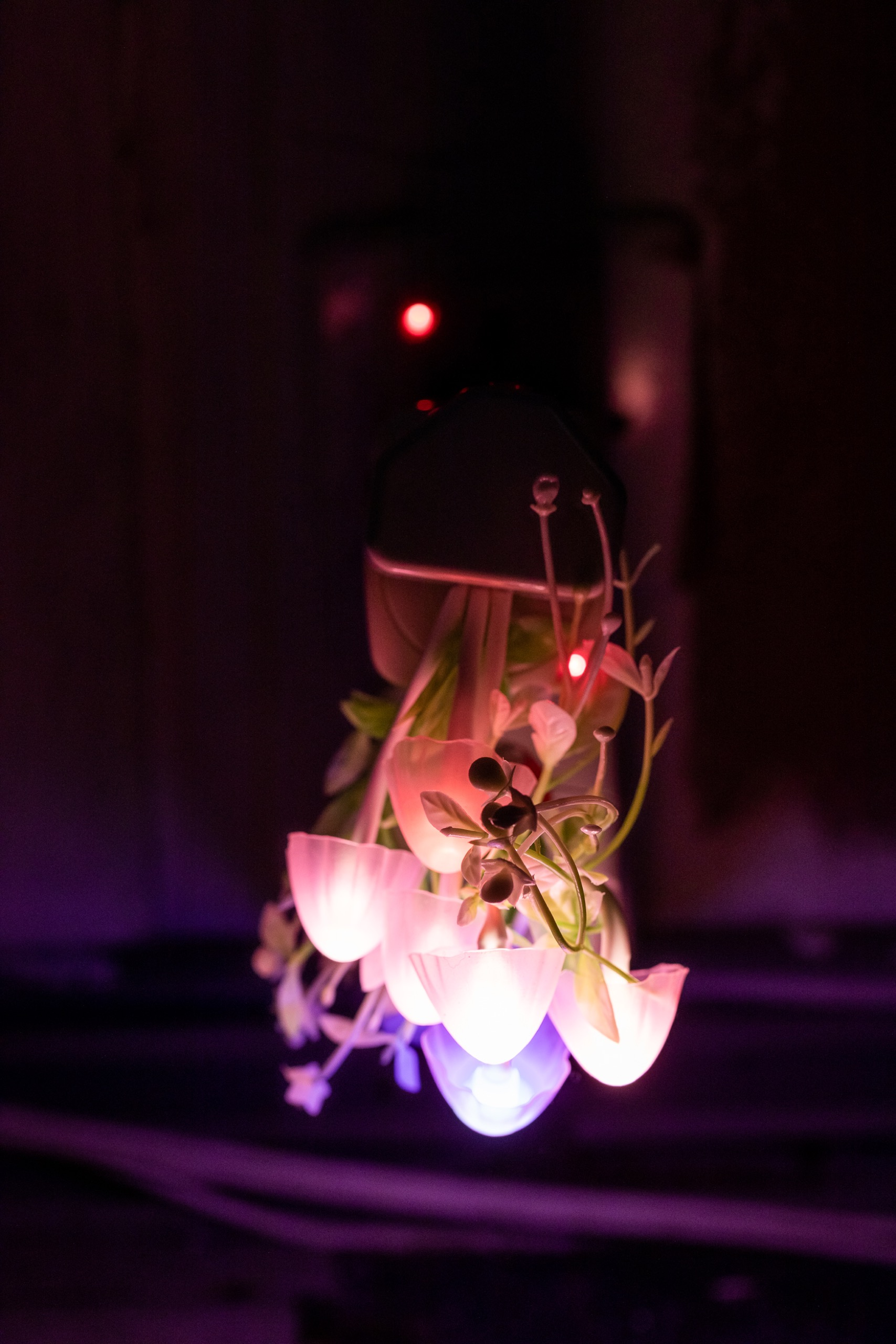 Trevor Yeung, Night Mushroom Colon (Two), 2017, night lamps, various plug adaptors