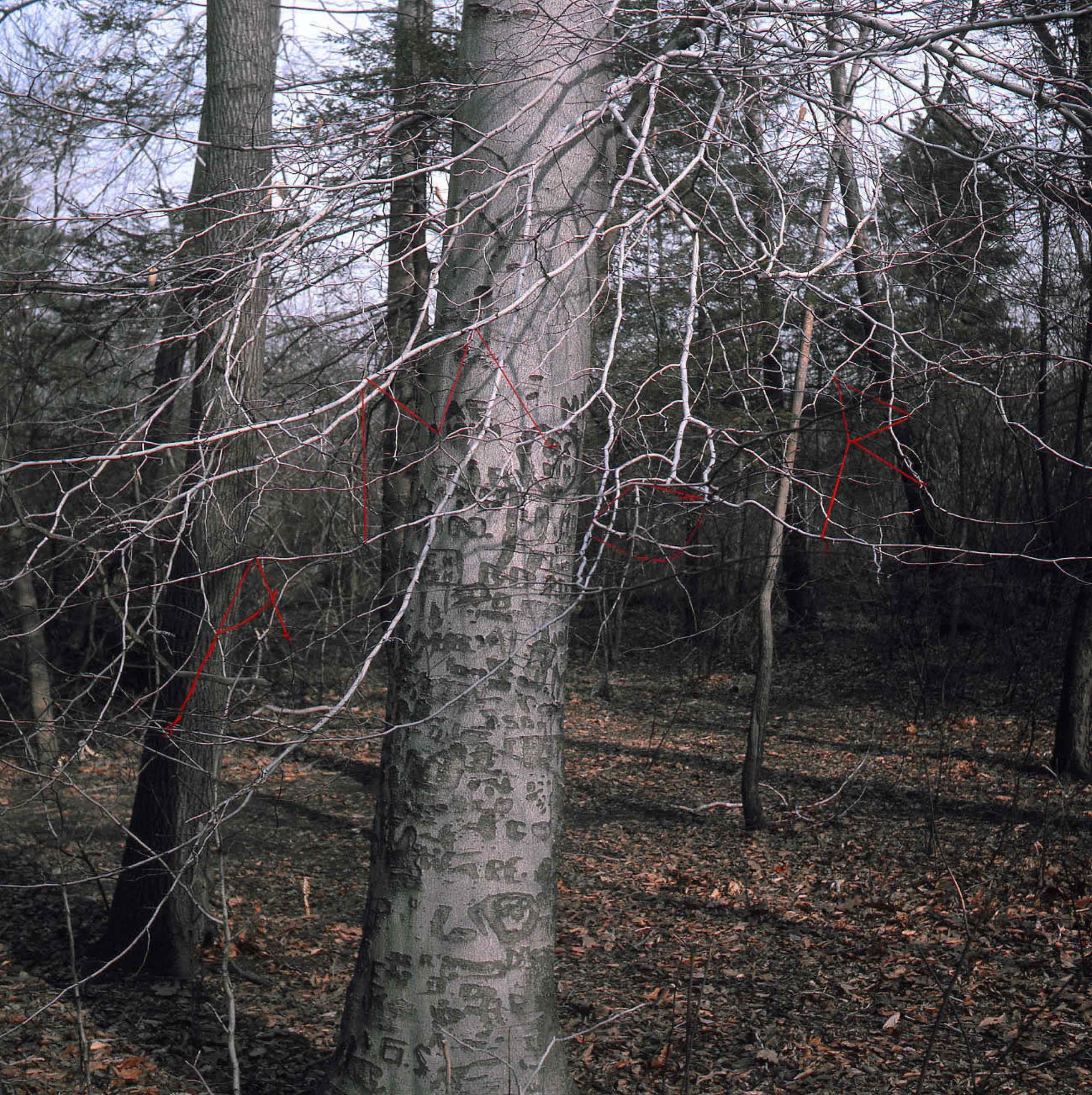 Cecilia Vicuña, Sidewalk Forests, 1981, Series of 4 digital prints