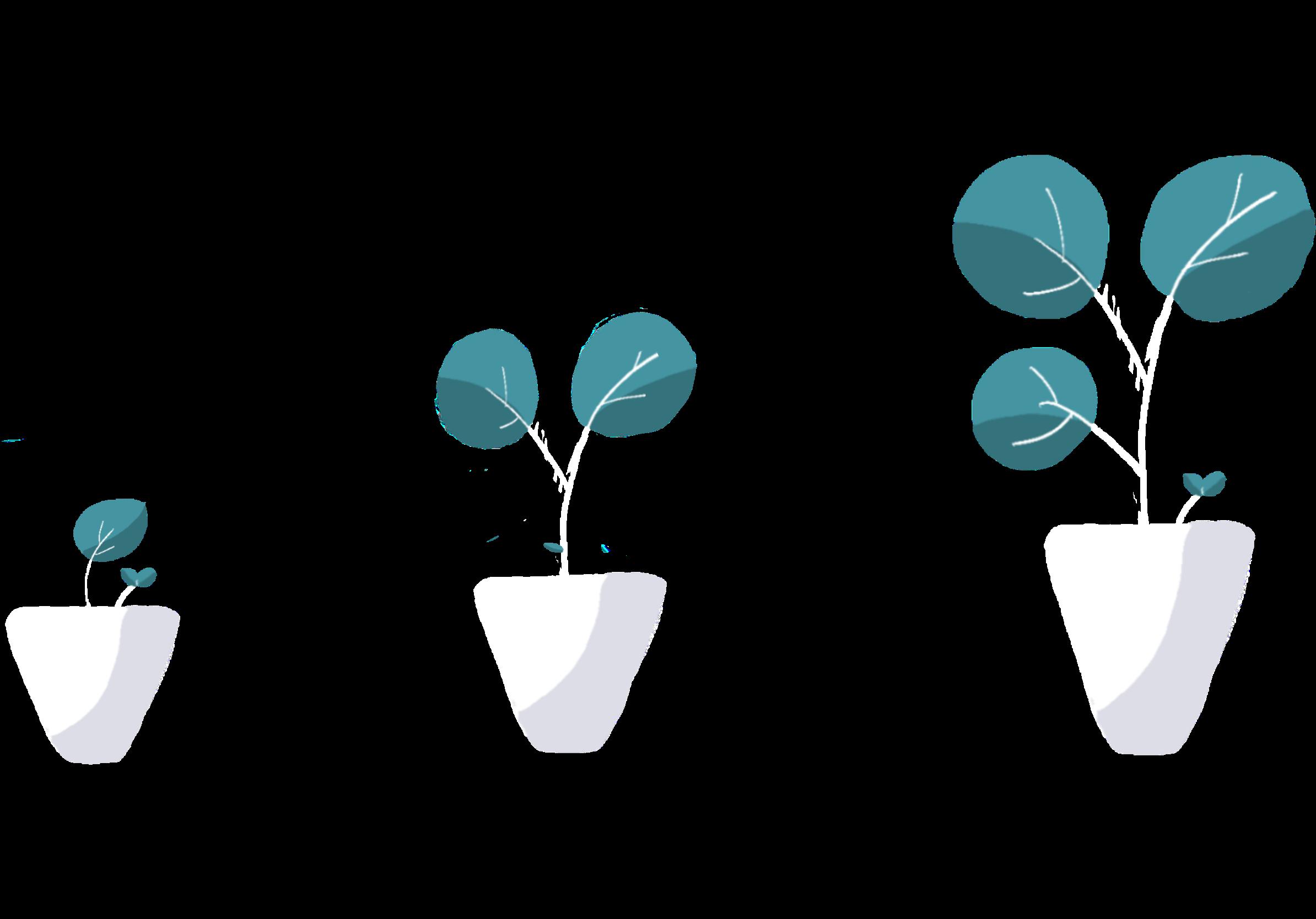 Growing seed start-up