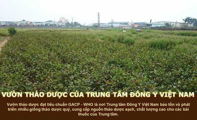 Vườn thuốc của Trung tâm Đông y Việt Nam