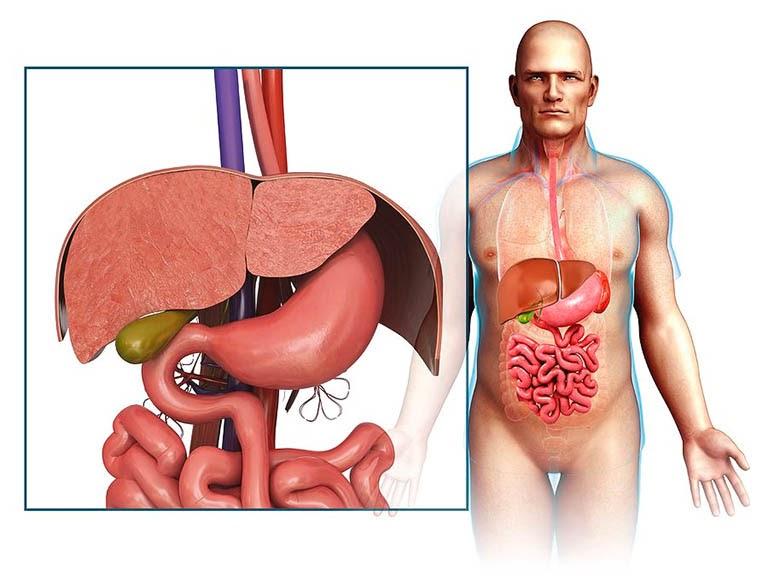 Xác định chính xác vị trí đau dạ dày giúp bạn có thể điều trị bệnh tốt hơn