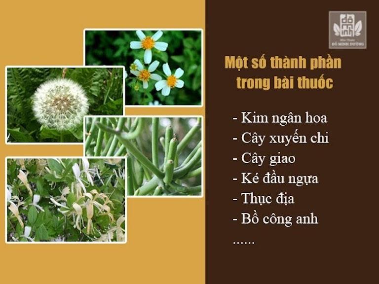 Thảo dược được thu hái tại các vườn thuốc ở Hòa Bình, Hưng Yên, Hà Nội