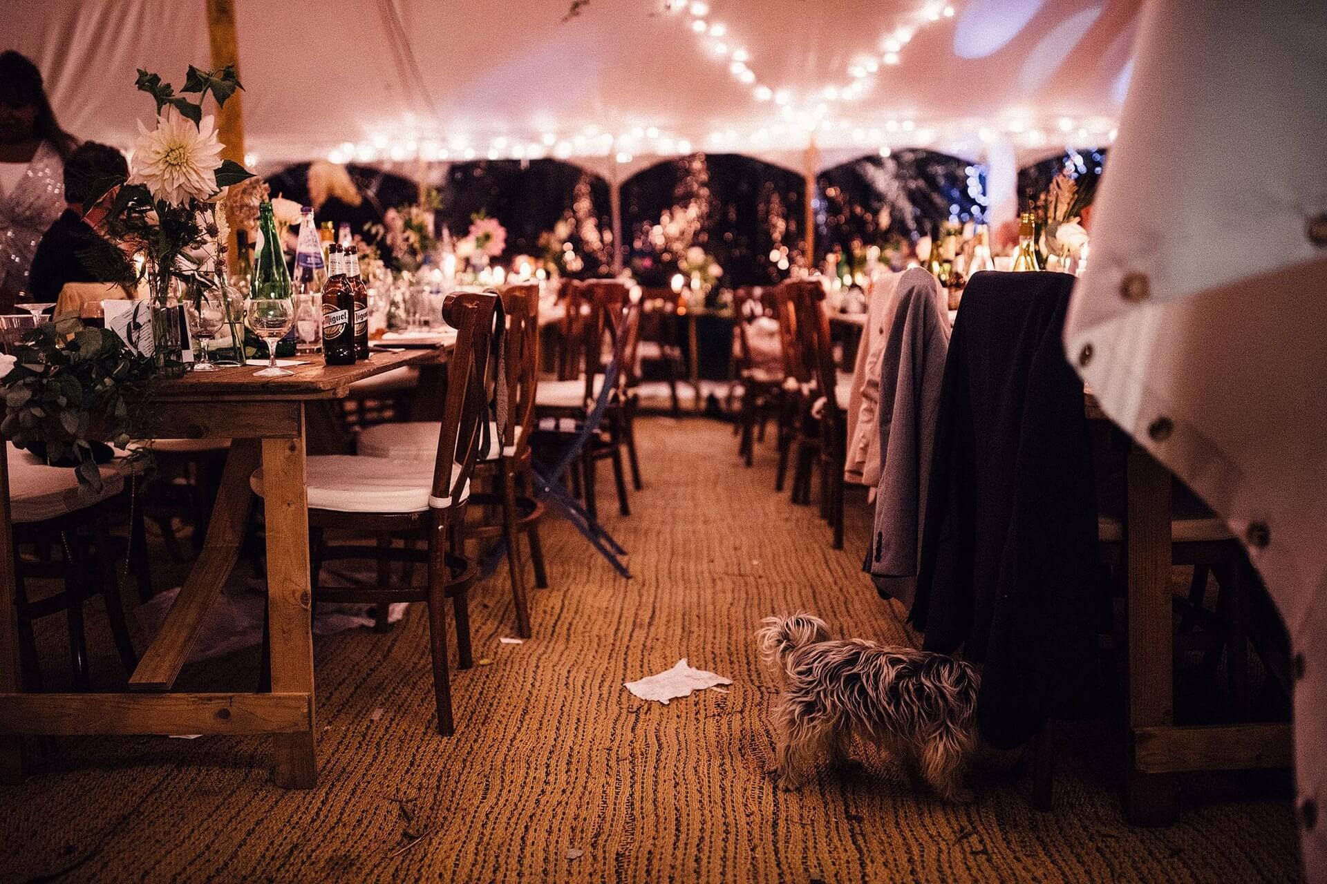 white wedding marquee hire near holsorthy in devon, uk