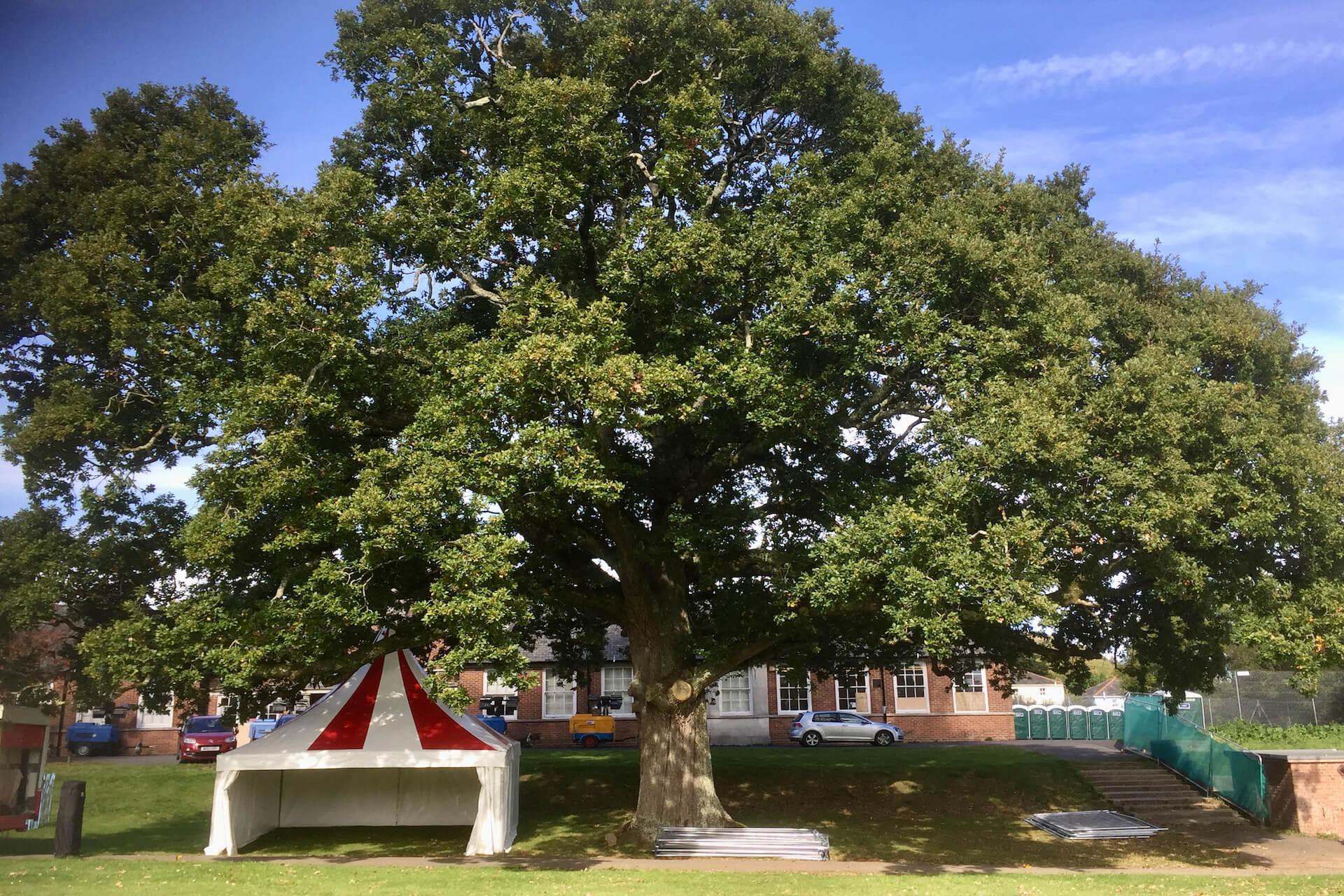 Red & white pagoda under big oak tree