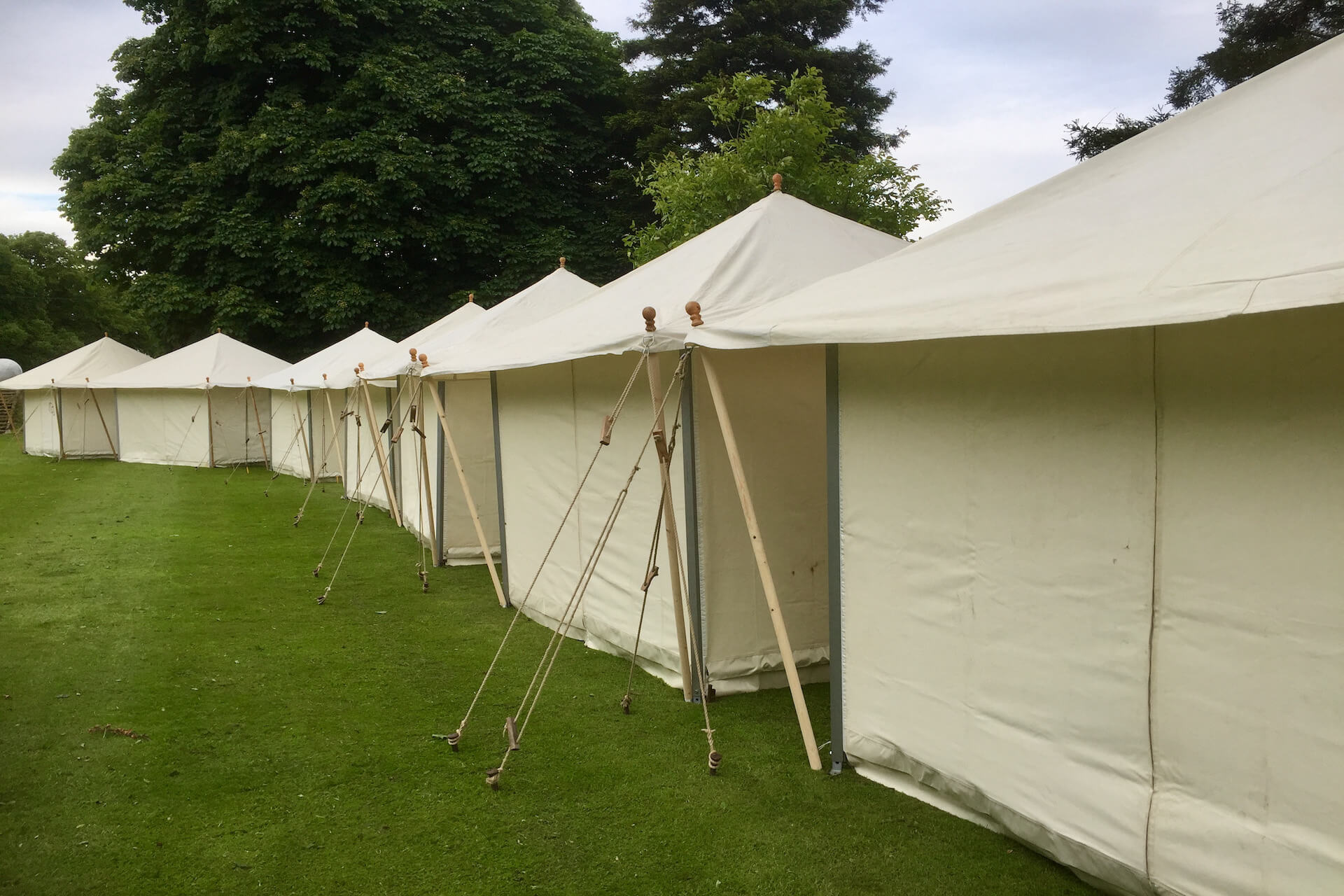 Tea Rose marquees